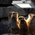 Foco Proyector LED 30W AVANCE OSRAM Area-led